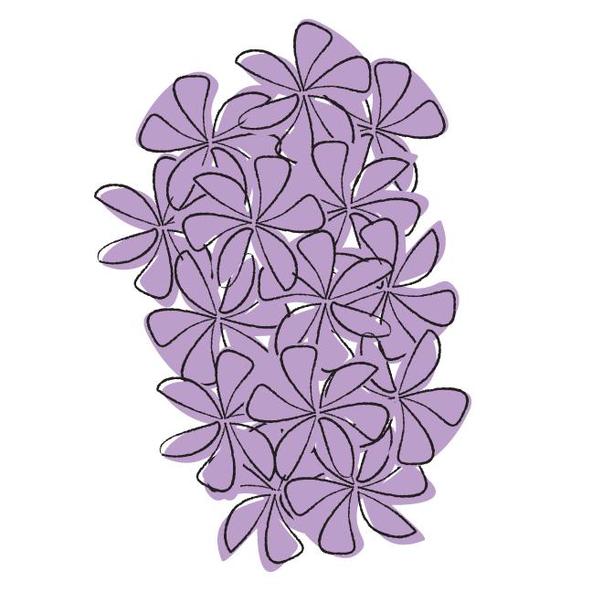 hyacinthsquare